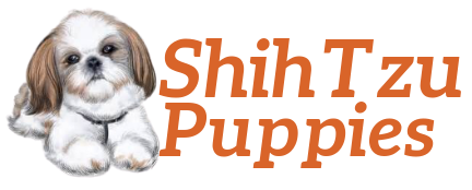 Family Raised Shih Tzu  puppies  for sale